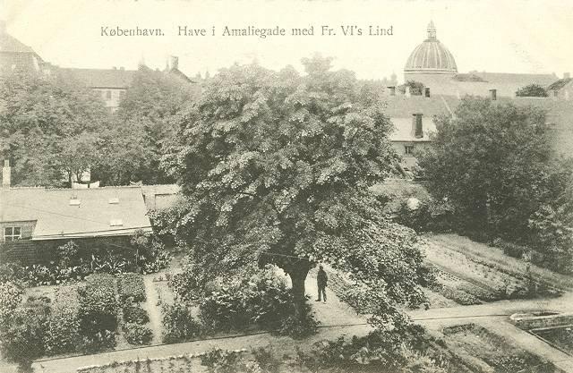 Amaliegade - Have i Amaliegade med Fr. VI´s lind - postkort fra ca 1915