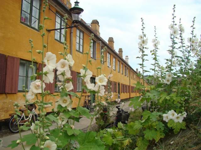 Delfingade 32-35 - Øster Voldgade 46 - 2